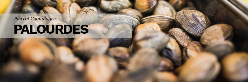 Achat et vente de palourdes et petits coquillages à Marseille