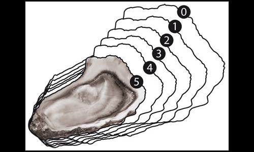 Comment choisir la taille d'une huître ?