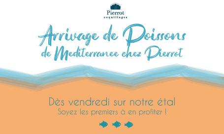 Arrivage de Poissons de Méditerranée chez Pierrot!